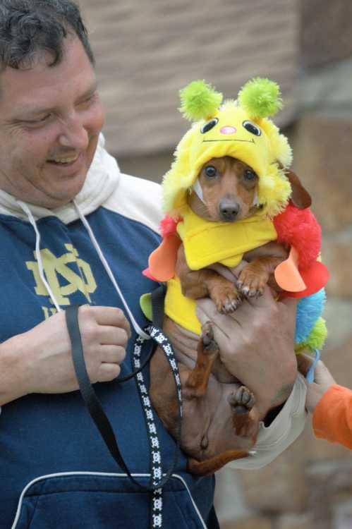 Photo gallery: Pet Parade 2016 (10/27/16) | Greene County